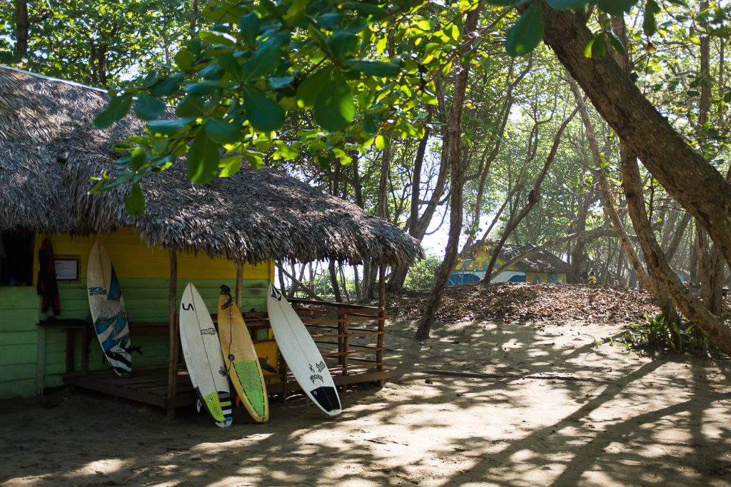 learn to surf in cabarete