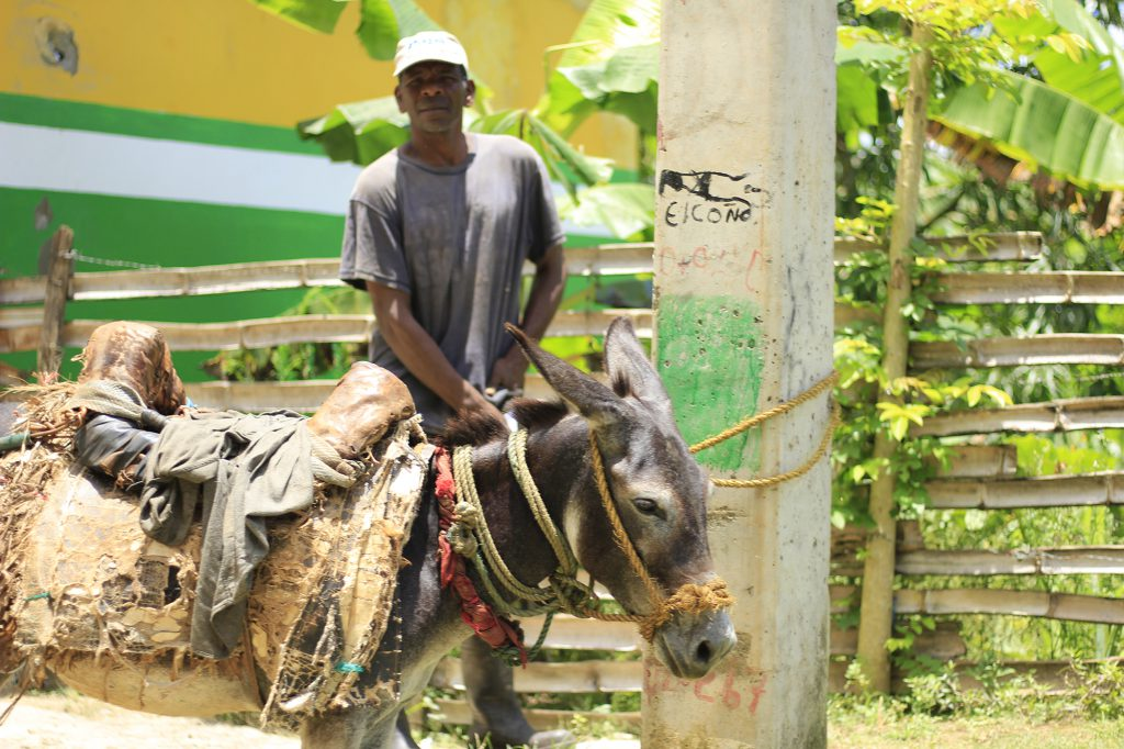 Dominican Republic donkey and farmer