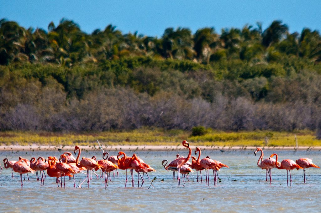 Flamingos at lake Enriquillo